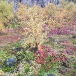Beautiful autumn colors in Skaftafell.